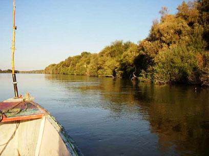 On the Nile near Amara West, seeking modern plant material for reference collection