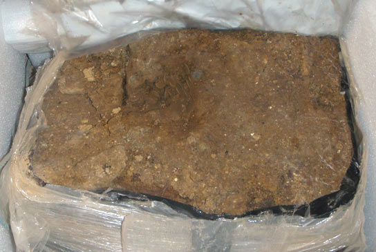 The hoard in its soil block when it arrived in the conservation lab at the British Museum