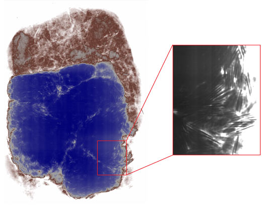 An X-radiograph of the soil block before conservation. © University of Southampton