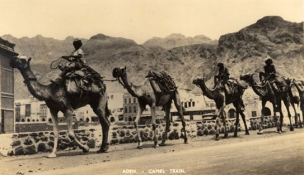 Postcard with a view of a camel train, Aden