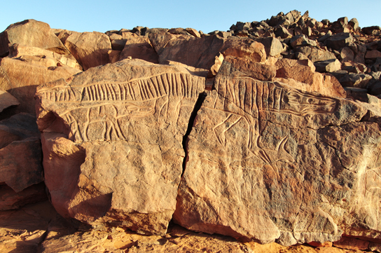 Crocodile rock engraving, Messak, Libya. © David Coulson/TARA