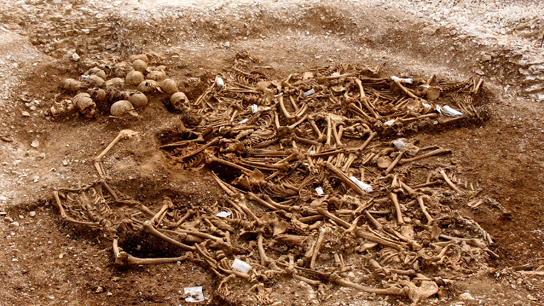 Mass grave from Weymouth. Exh. cat. chapter 2, fig. 30.  © Dorset County Council / Oxford Archaeology
