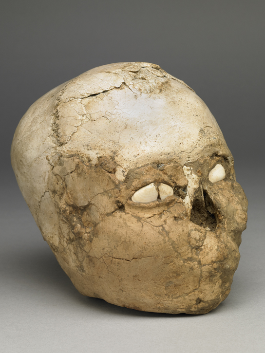 The Jericho skull shown facing sideways. The lips and remaining ear are modelled in plaster.