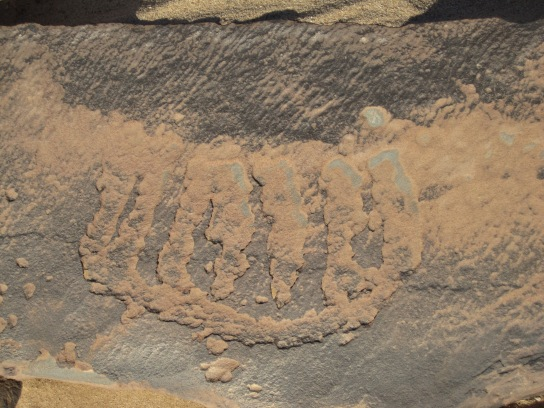 Engraved rock art showing feature similar to catenary pattern of bees' nest. Loumet Asli, Ouarzazate Province, Morocco. (Photograph © TARA/David Coulson)