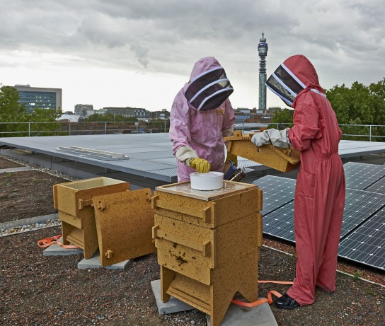 Beekeepers from the Urban Bee Project on the roof of the WCEC building (Photographs: Michael Row, British Museum)