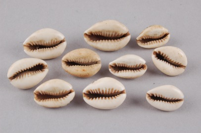 Image 3_Cowrie shells